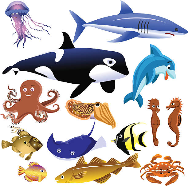 sea animals set of marine animals isolated on a white background arthropod stock illustrations
