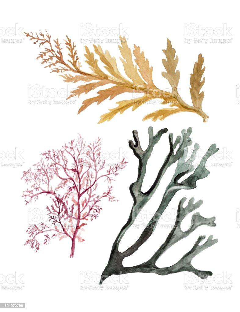 Carcasa y algas marinas mar - ilustración de arte vectorial