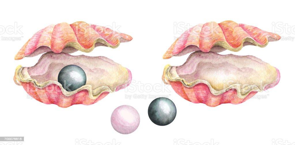 Sea shells with pearls. Watercolor illustration vector art illustration