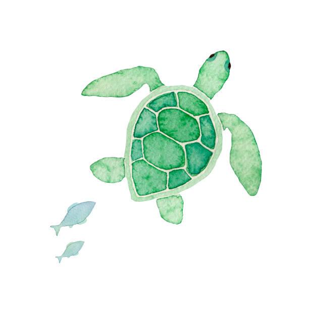 Sea turtle Sea turtle turtle stock illustrations