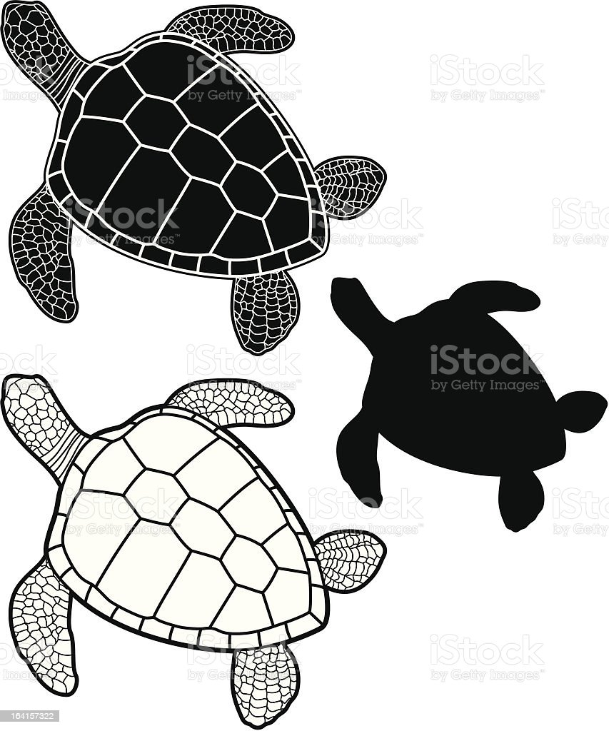 Sea turtle royalty-free sea turtle stock vector art & more images of animal