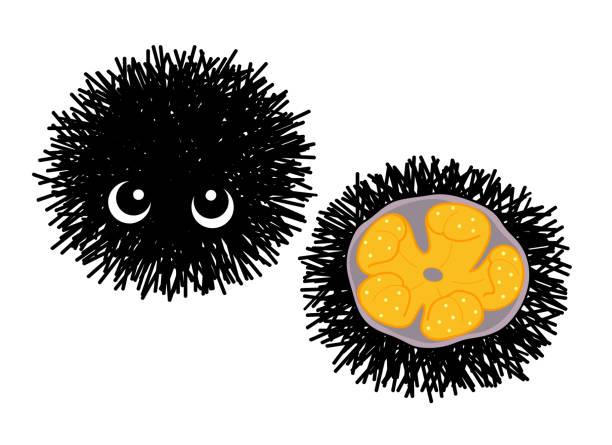 ウニ Sea urchin ベクターアートイラスト