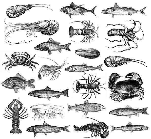ilustraciones, imágenes clip art, dibujos animados e iconos de stock de ilustraciones de pescados y mariscos, langosta y camarones, almejas, el cangrejo, pulpo - comida española