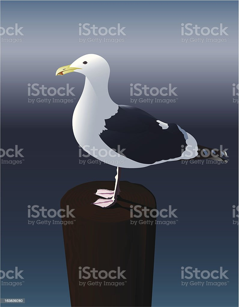 Seagull royalty-free stock vector art