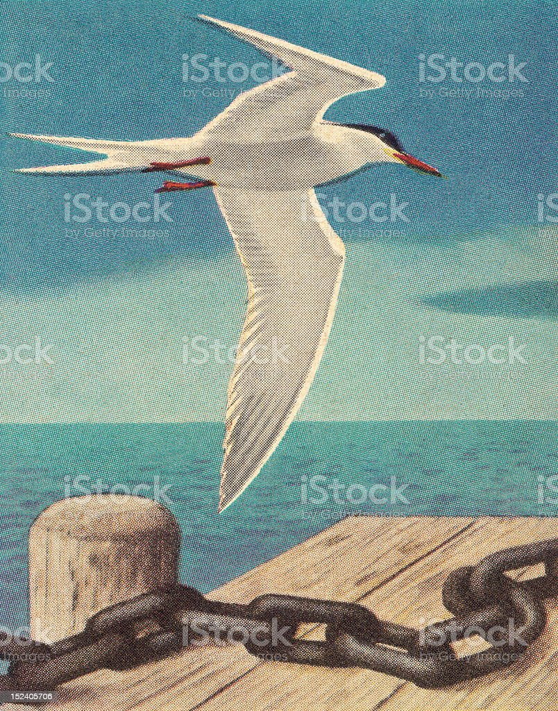 Seagull Near Dock vector art illustration