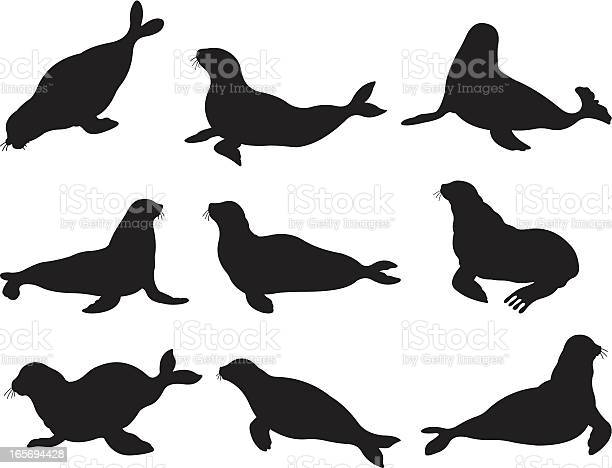 Seals in action illustration id165694428?b=1&k=6&m=165694428&s=612x612&h=mgh4lsn3divehlffxtorm6r0ignypzrliovwhw6acpe=