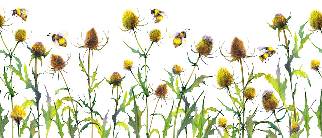 Seamless banner with wild thistle plants and bumblebees.