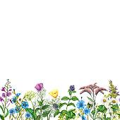 Seamless border of watercolor garden flowers