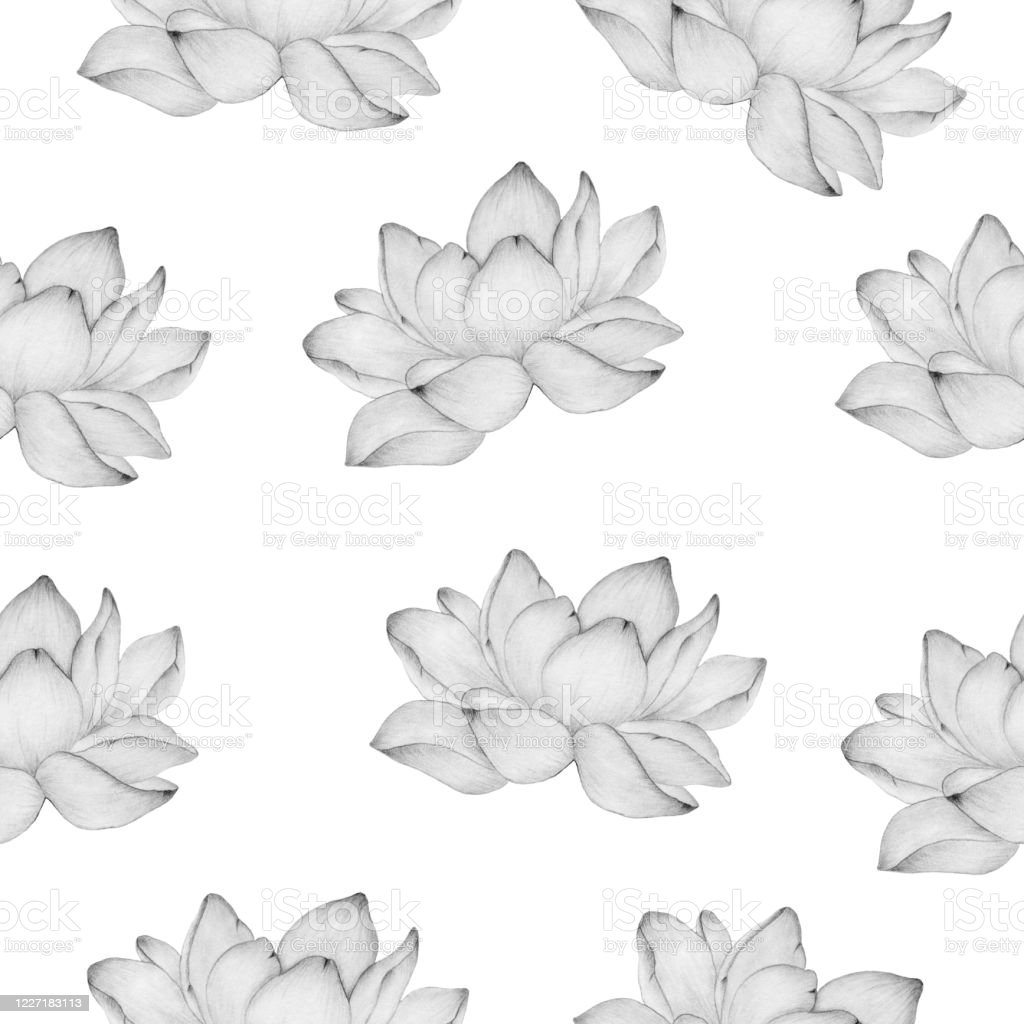 Seamless Floral Background With Lotus Flower In Pencil Drawing Simple And Elegant Floral Pattern For Fabric Wrapping Projects Or Backgrounds Stock Illustration Download Image Now Istock