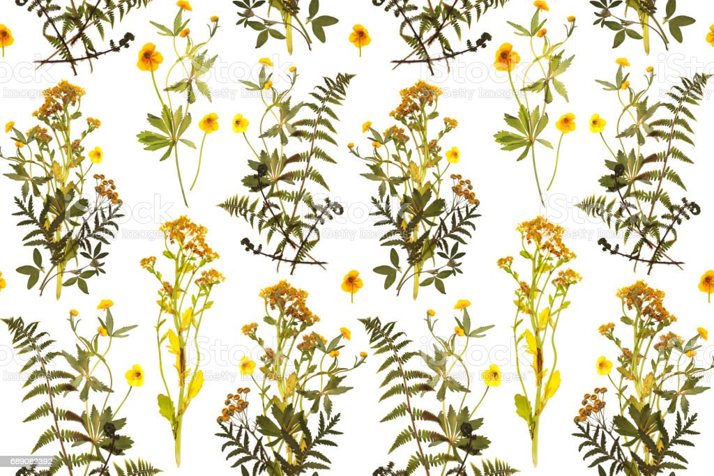 Seamless floral pattern with herbs yellow flowers stock vector art seamless floral pattern with herbs yellow flowers royalty free stock vector art mightylinksfo