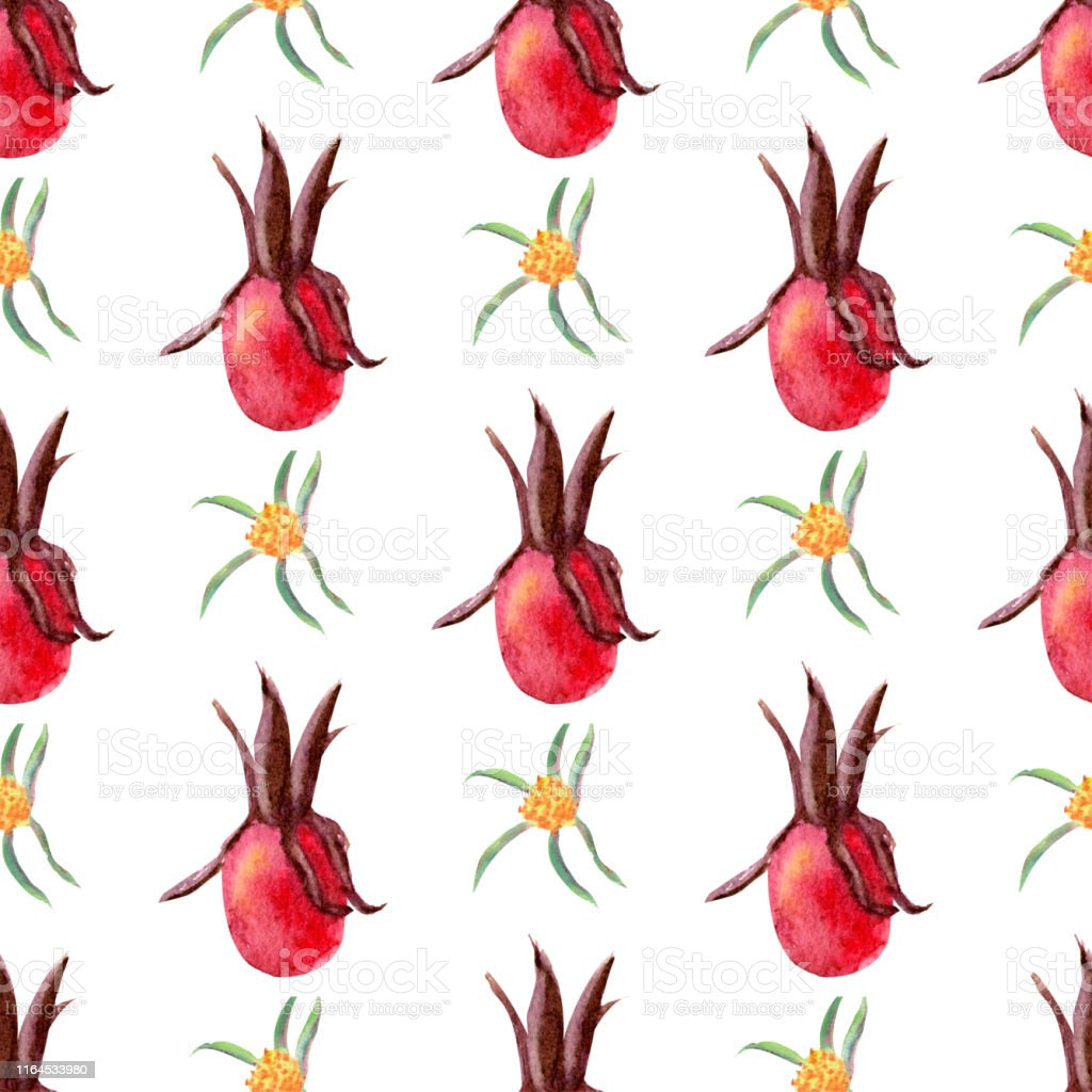 Seamless pattern. Flowers and fruits of rose hips Watercolor. Flower...
