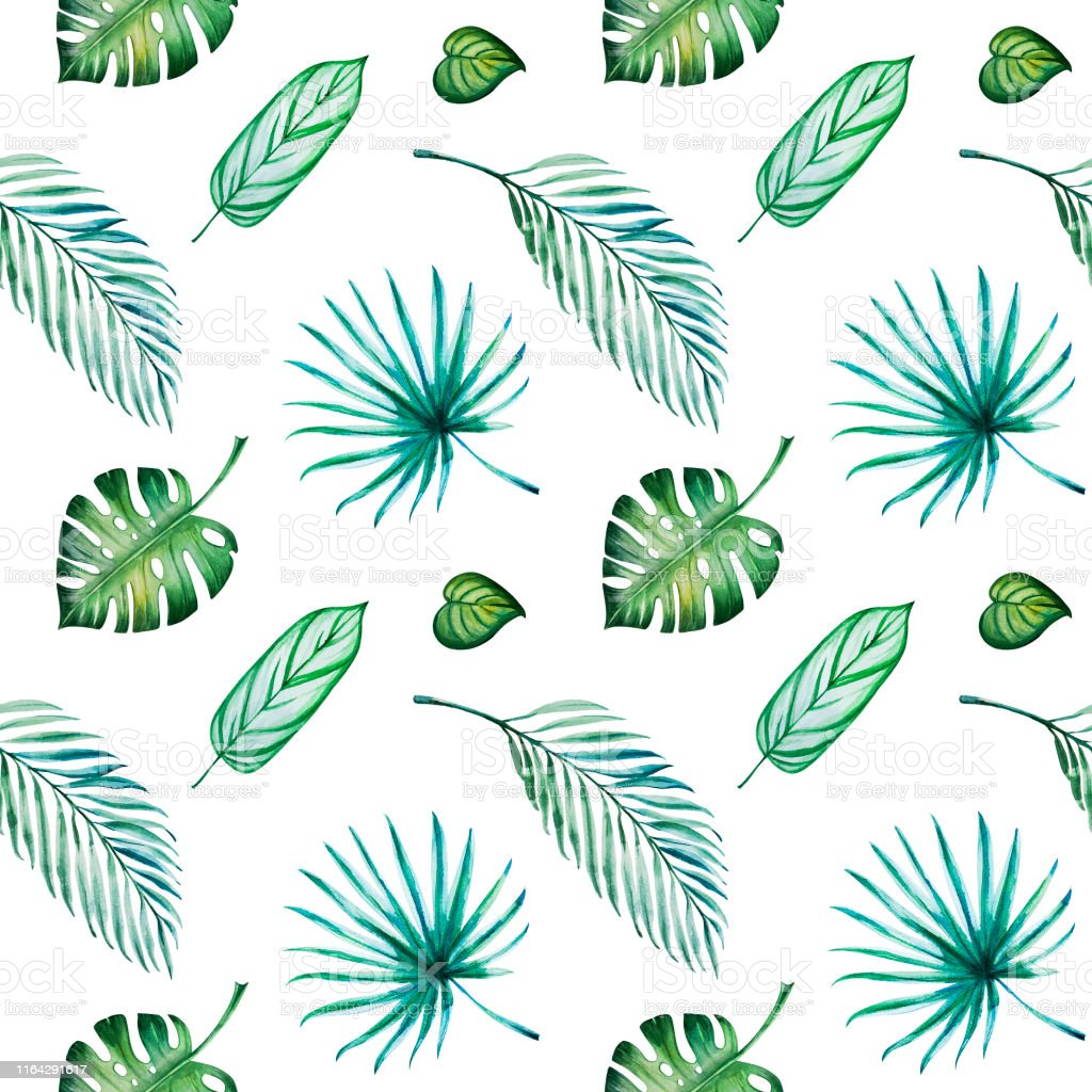 Tropikal Yapraklari Dikissiz Desen Monstera Avuc Ici Suluboya
