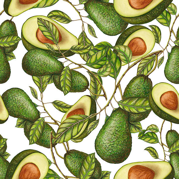 Seamless pattern of avocados Hand drawn pattern of avocados avocado patterns stock illustrations