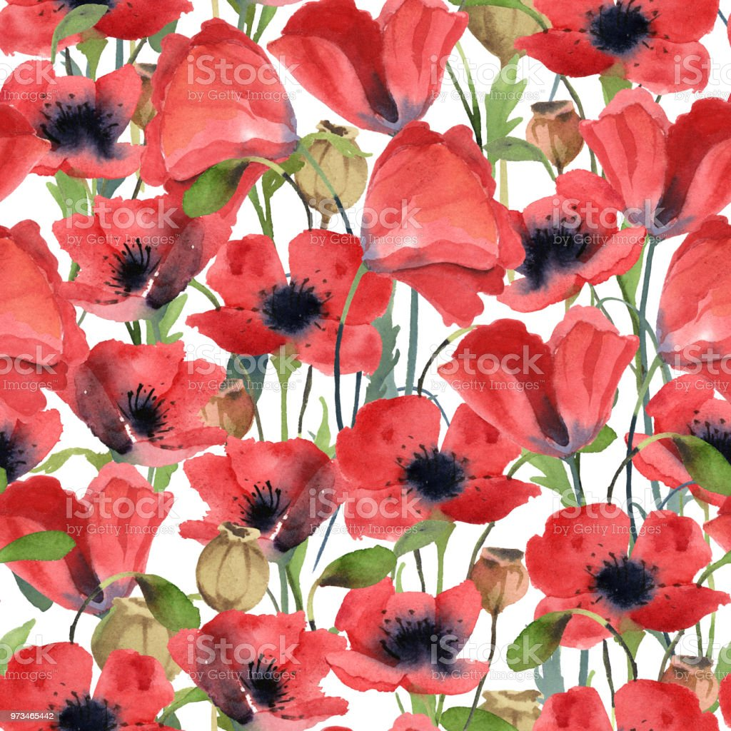 Seamless Pattern Of Red Poppy Flowers Leaves And Poppy Head Isolated