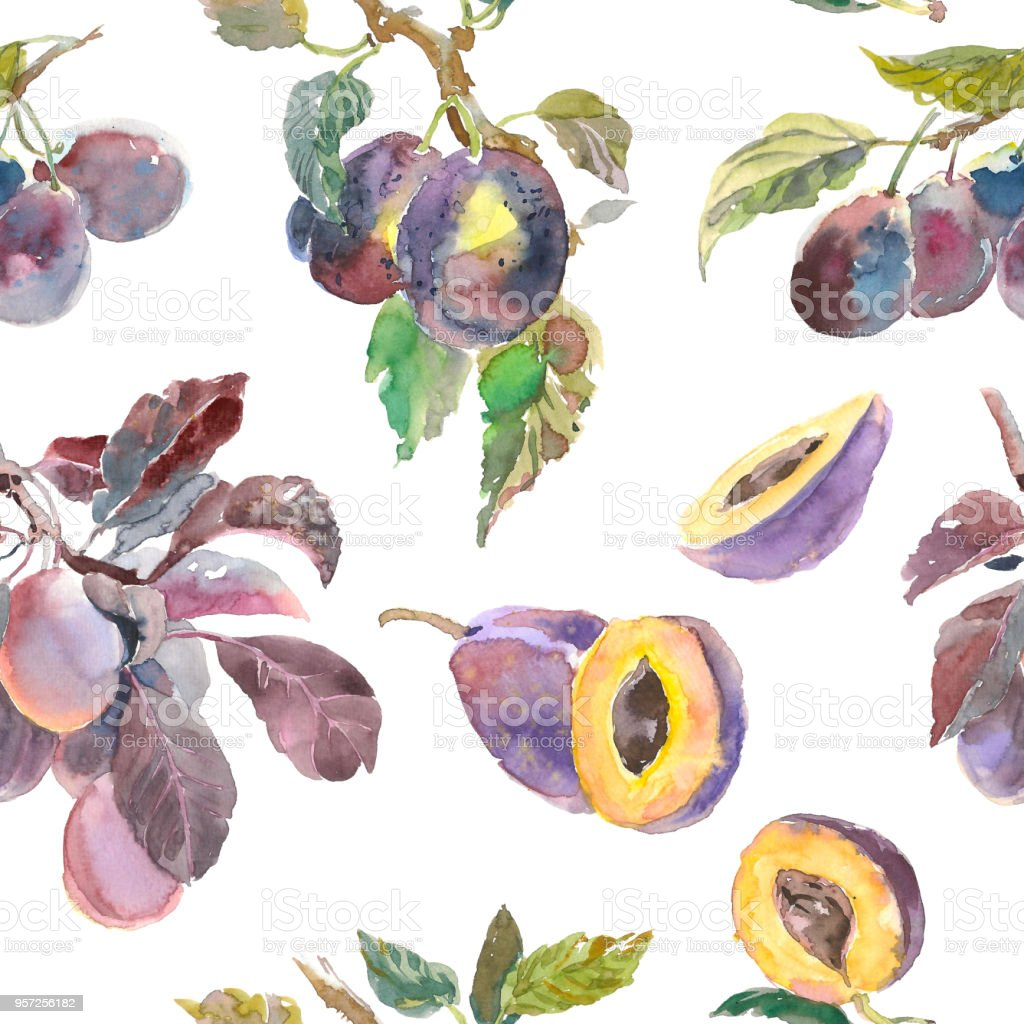 Design For Cloth Painting   Seamless Pattern Of Watercolor Fruit Plum Branch Isolated On White