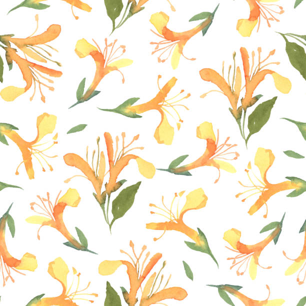 Seamless pattern of watercolor yellow honeysuckle flower isolate on white background. Flowers for wedding cards. Seamless pattern of watercolor yellow honeysuckle flower isolate on white background. Flowers for wedding cards. honeysuckle stock illustrations