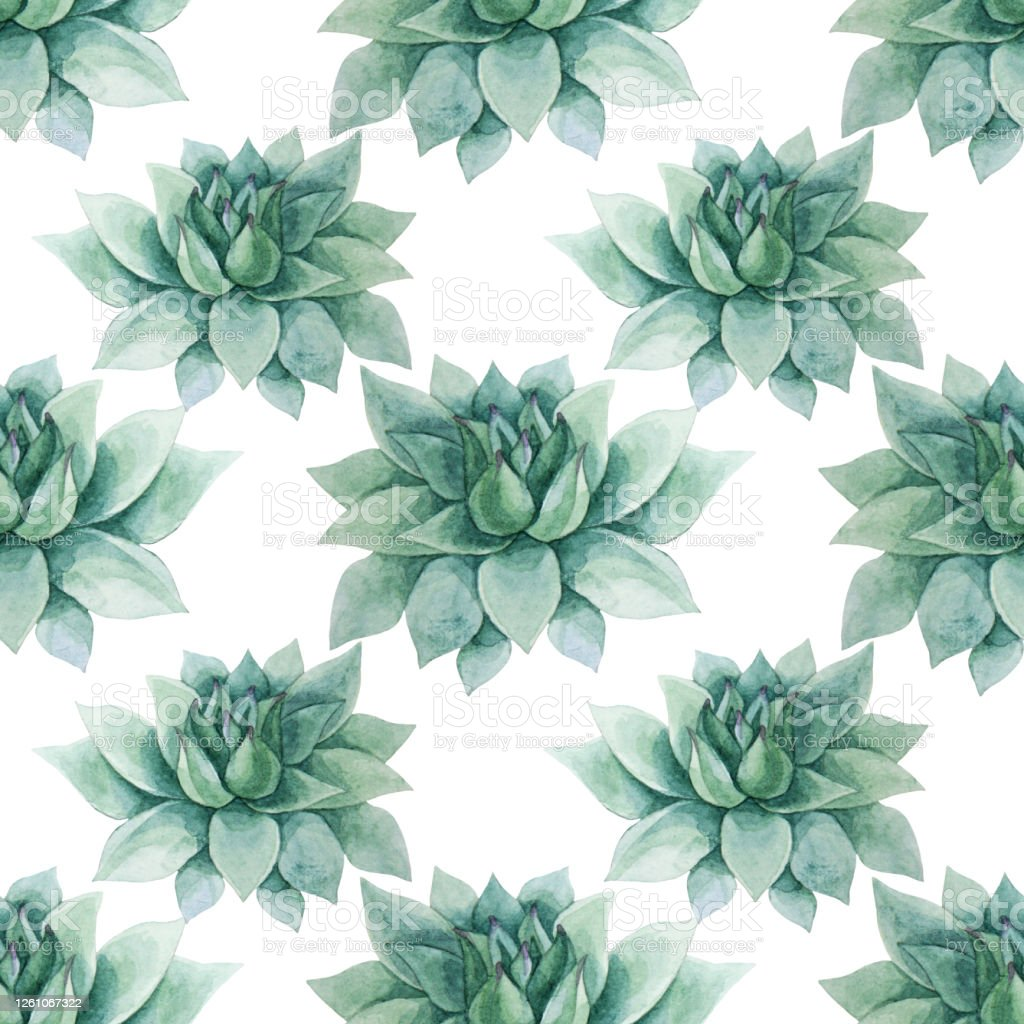 Seamless Pattern Watercolor Handdrawn Green And Blue Succulent Echeveria Home Plant Stock Illustration Download Image Now Istock