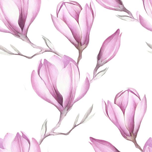 bezszwowy wzór z kwitnącą gałązką magnolii. ilustracja akwarela. - gałąź część rośliny stock illustrations