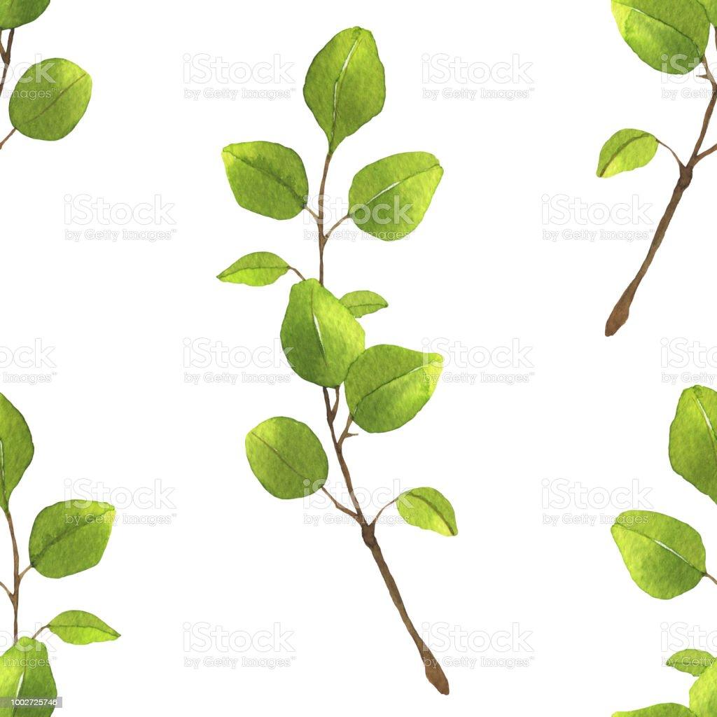modèle sans couture avec branche deucalyptus vert isolé sur fond