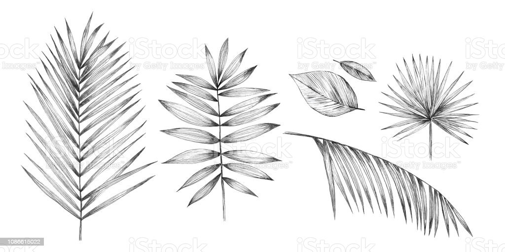 Seamless Pattern With Palm Leaves Simple Pencil Drawing Manual Graphics Design For Packaging Postage Textiles And Fabrics Tropical Leaves Pattern Palm Leaves Stock Illustration Download Image Now Istock