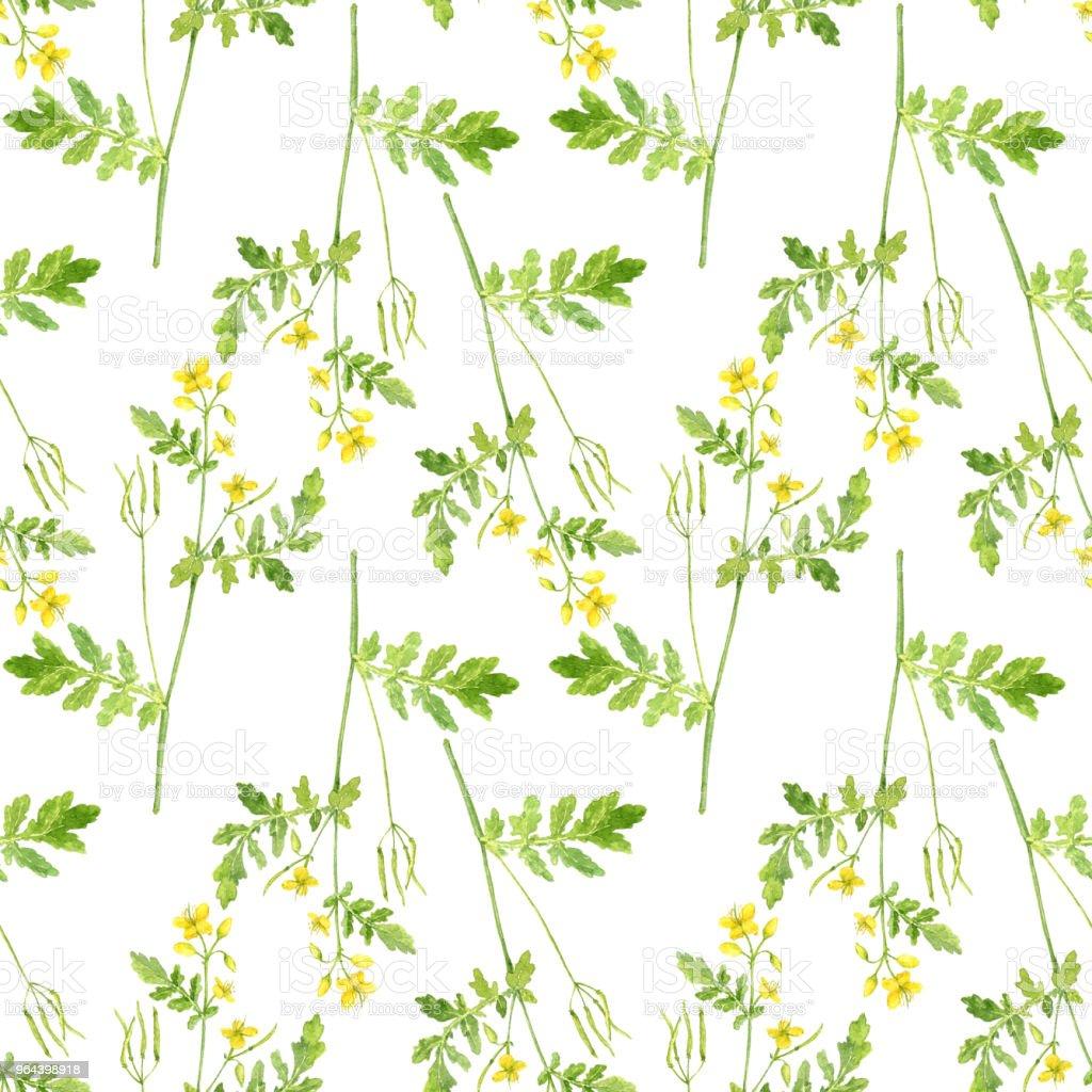 Naadloze patroon met plant van stinkende gouwe - Royalty-free Achtergrond - Thema Stockillustraties