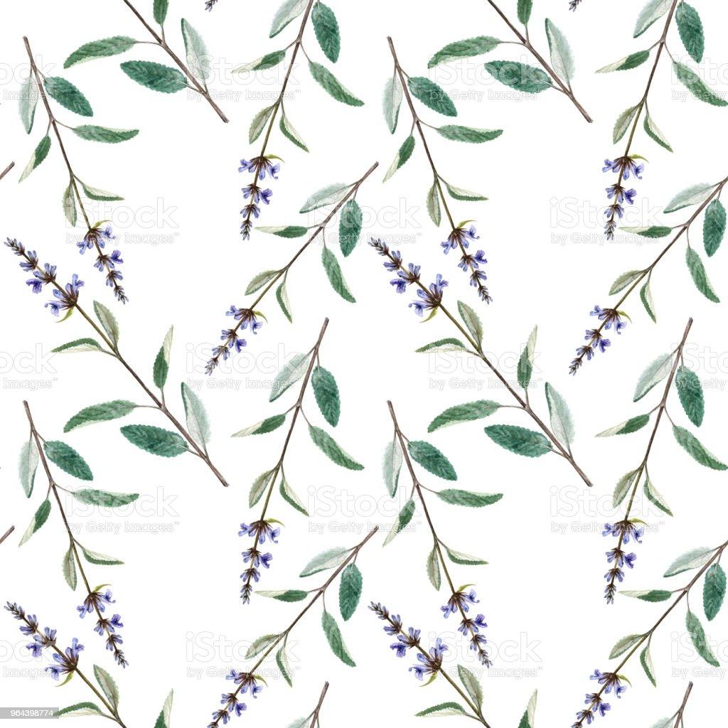 Naadloze patroon met planten van salvia - Royalty-free Aquarel Stockillustraties