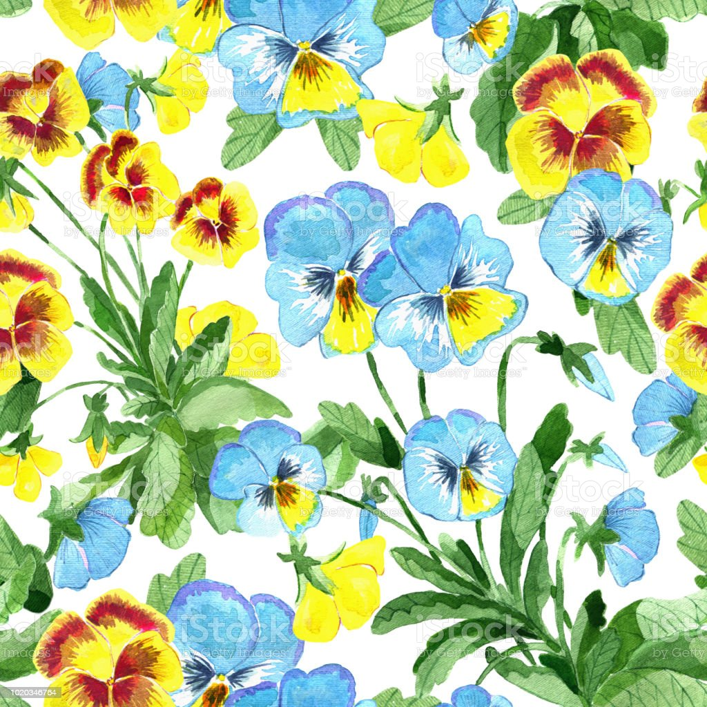 Seamless Pattern With Yellow And Blue Garden Pansy Flowers And