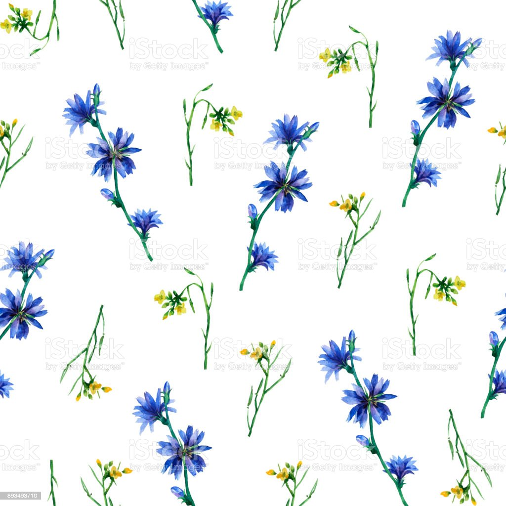 Seamless Pattern With Yellow Rocket And Blue Chicory Flowers Hand