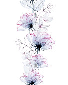 seamless watercolor border of transparent rose flowers and eucalyptus leaves isolated on white background. transparent blue and pink flowers, x-ray. vintage design for wedding, cards, invitations.