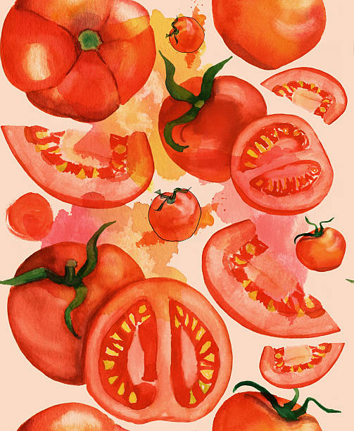 動物の島 50 素晴らしいトマト 断面 イラスト