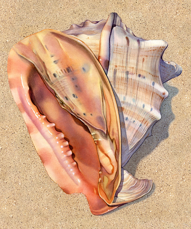 Seashell - Helmet Large