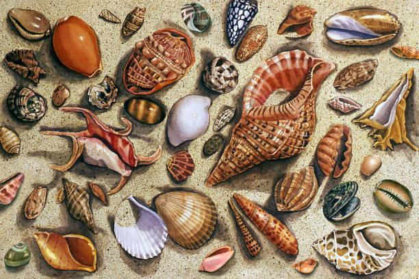 ilustrações de stock, clip art, desenhos animados e ícones de seashell medley - lapa