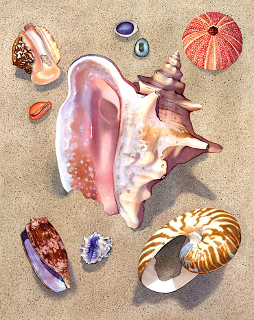Seashell - Pink Conch