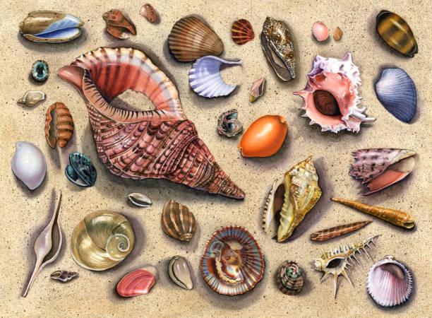ilustrações de stock, clip art, desenhos animados e ícones de seashell - pink triton - lapa
