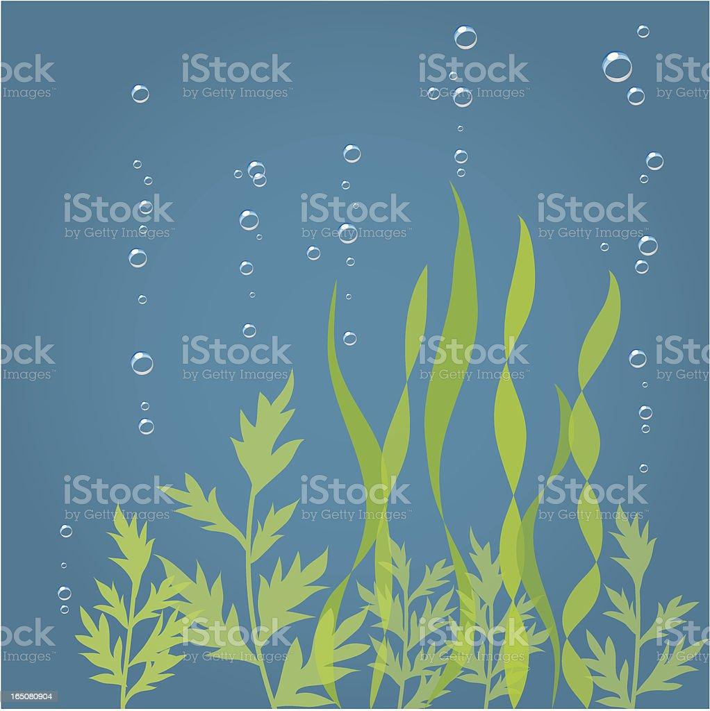 Seaweed royalty-free stock vector art