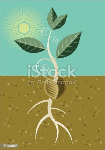 istock Seedling 97403995