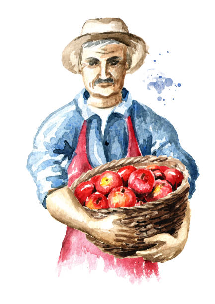 senior farmer with freshly picked apples in basket. watercolor hand drawn illustration, isolated on white background - old man hats pictures stock illustrations, clip art, cartoons, & icons