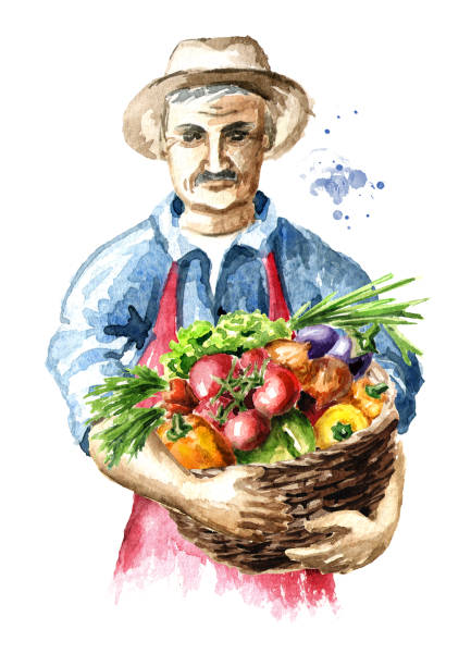 senior farmer with freshly picked vegetables in basket. watercolor hand drawn illustration, isolated on white background - old man hats pictures stock illustrations, clip art, cartoons, & icons