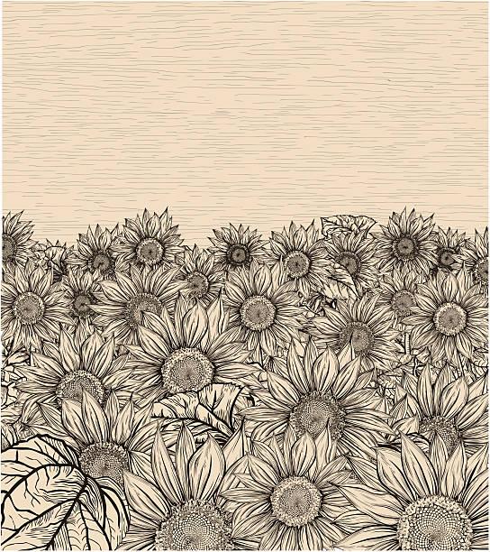 Sepia sunflowers field vector art illustration