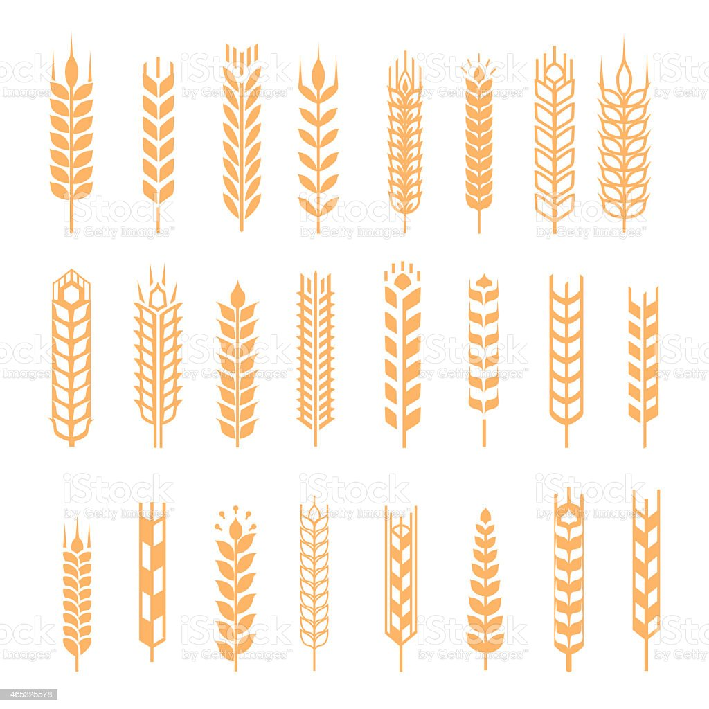 A series of wheat icons on a white background vector art illustration