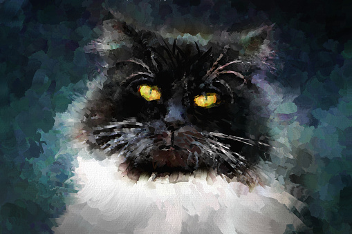 serious cat, painted in oil