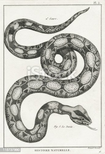 Copper engraved book plate of snakes from Buffon's encyclopedia Histoire Naturelle, circa 1751 Paris, France.  Illustrated by Benard.