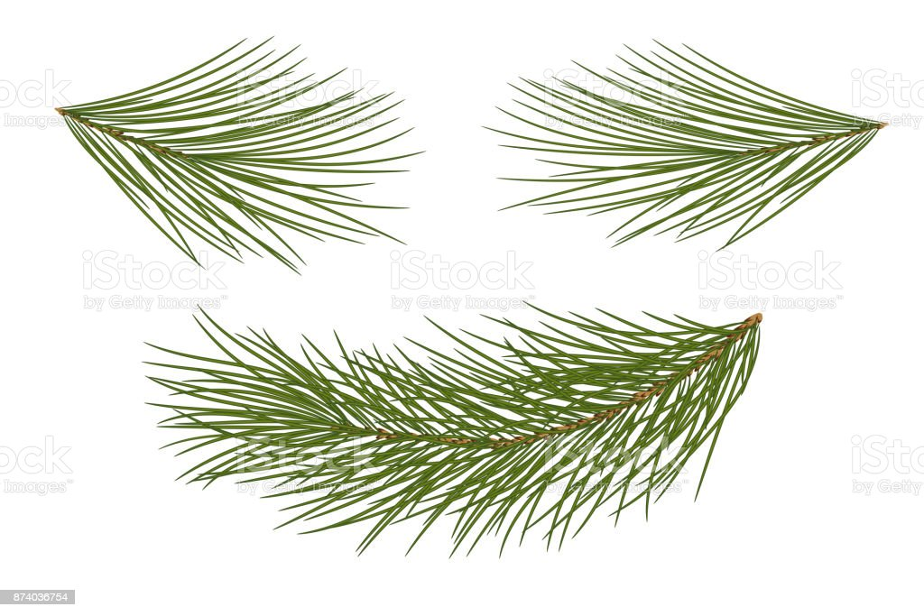 Set For Christmas Decor Drawing Pine Branches Isolated Royalty Free