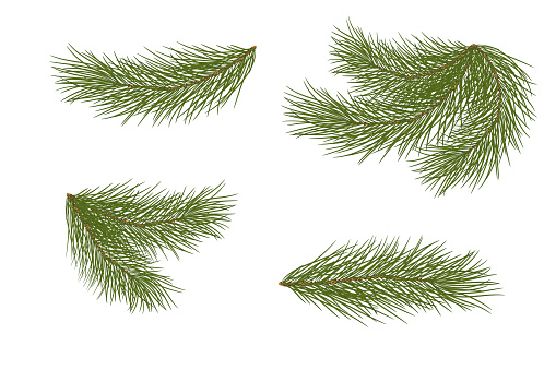 Set For Christmas Decor Drawing Pine Branches Isolated Stock Illustration Download Image Now Istock