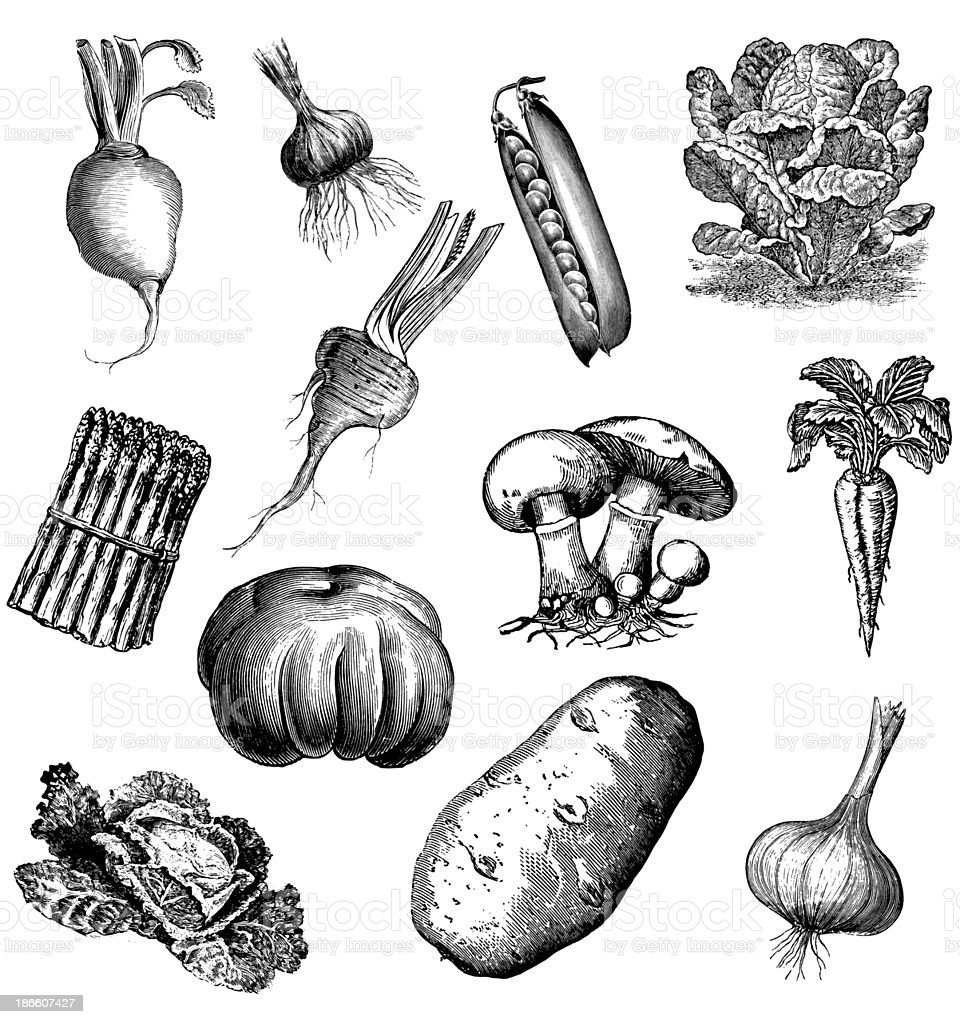 Set of 12 Vegetables vector art illustration