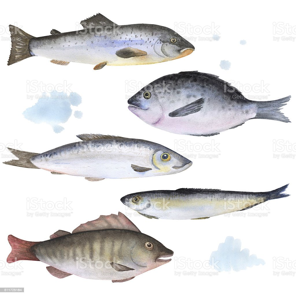 Set of 5 fish painted in watercolor vector art illustration
