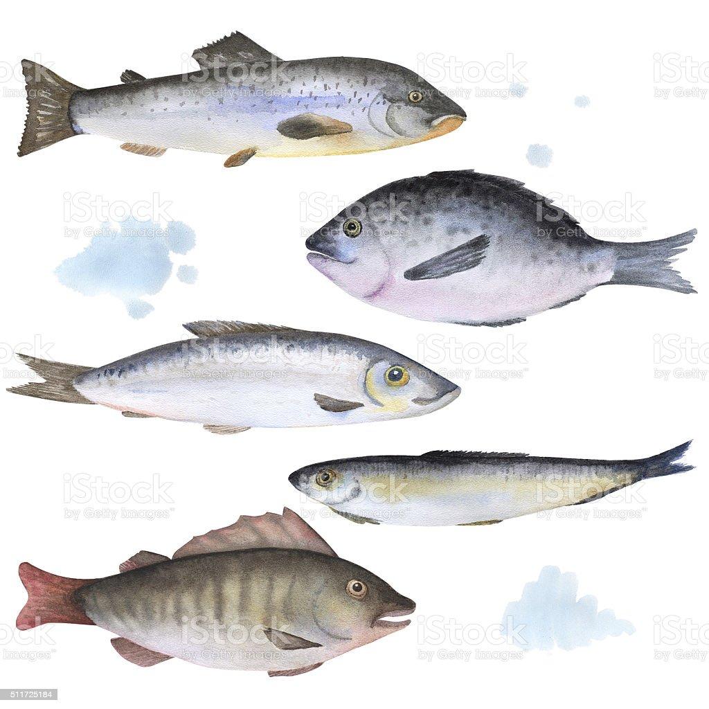Conjunto de 5 pescado pintado en acuarela - ilustración de arte vectorial