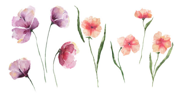 Set of abstract watercolor flowers. Lilac and orange flowers on a white background, single elements. vector art illustration