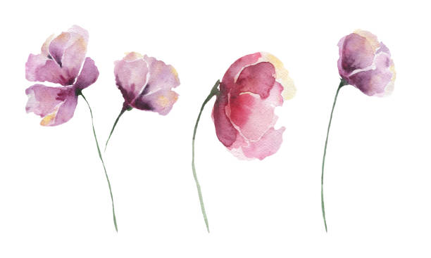 Set of abstract watercolor flowers. Lilac flowers on a white background, single elements. vector art illustration