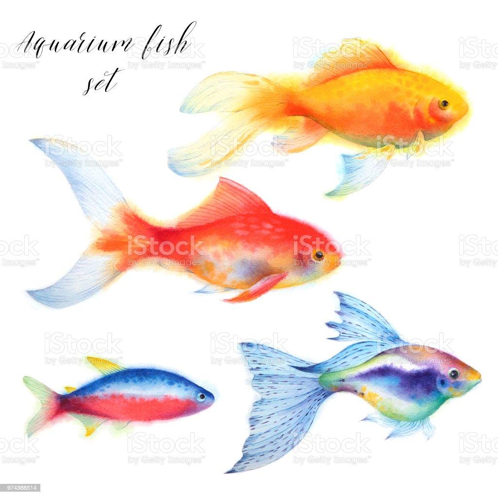 Set Of Aquarium Fish Goldfish Guppy And Cardinal Tetra Stock Vector